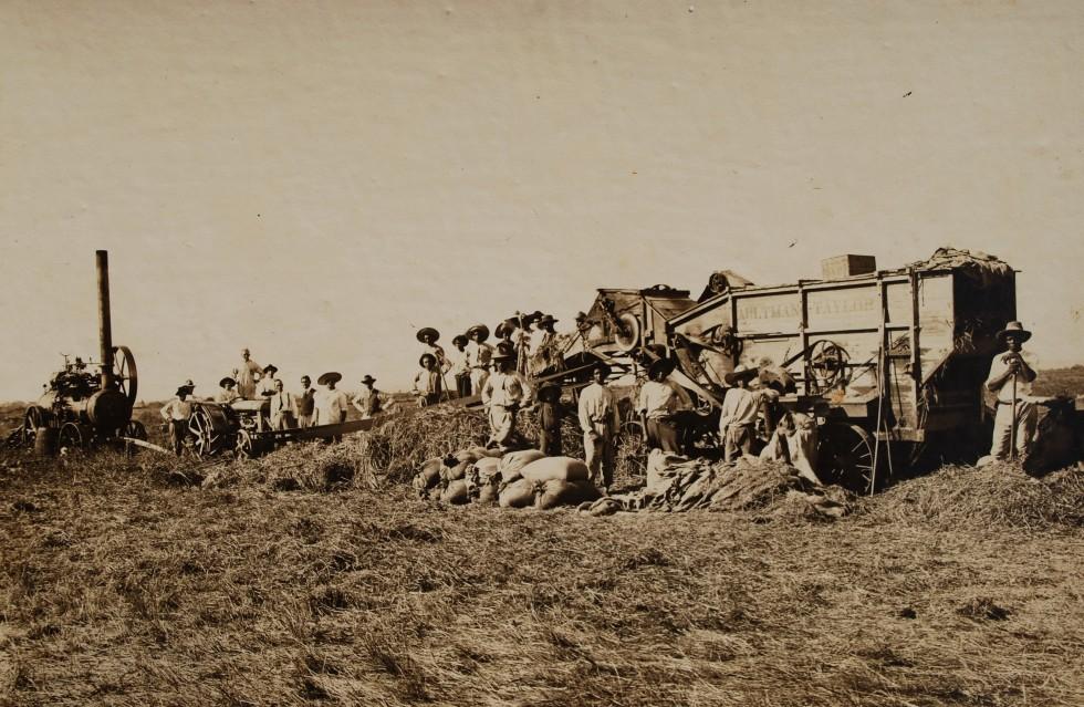 Do plantio à colheita - história revisitada